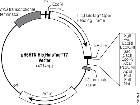 pH6HTN His6HaloTag® T7 Vector.